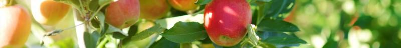 Apfelschäler von Lurch